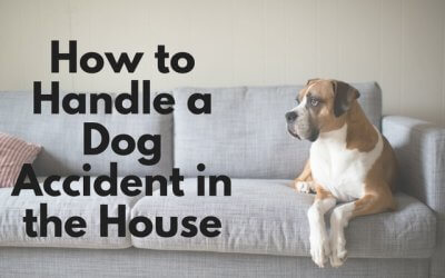 How to Handle a Dog Accident in the House