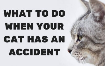 What to Do When Your Cat Has an Accident