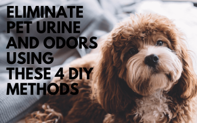 Eliminate Pet Urine And Odors Using These 4 DIY Methods