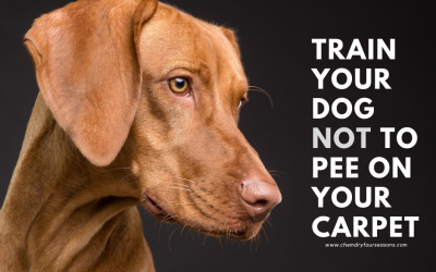 Train Your Dog NOT To Pee On Carpet